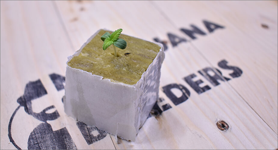 Stone Wool Cube for germinating