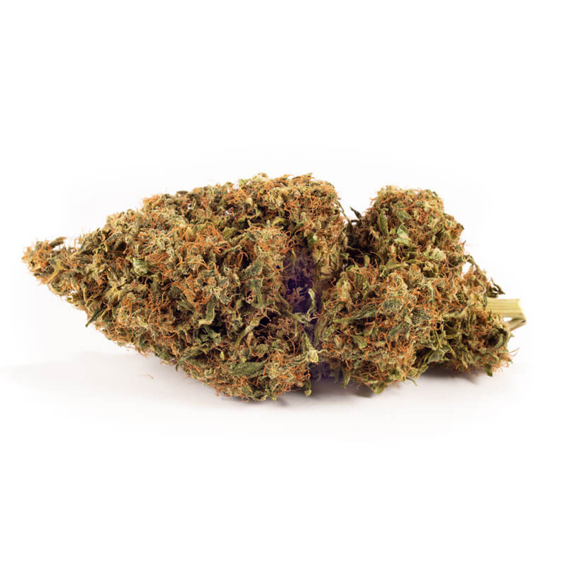 Dried Original Haze cannabis Bud
