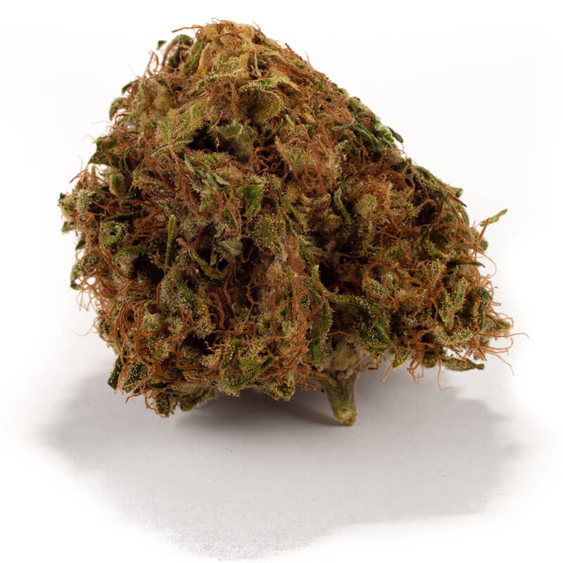 Dried Super Skunk weed Bud